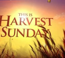 Harvest Sunday, for October 25